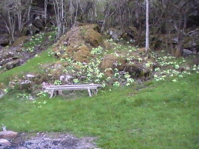 Grønn eng forside